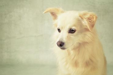 portfolio-huisdieren-es-3.jpg