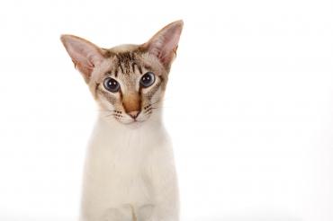 portfolio-huisdieren-es-1.jpg
